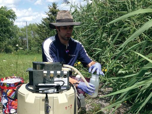 Étude de la problématique des marais filtrants dans l'assainissement des eaux au Québec