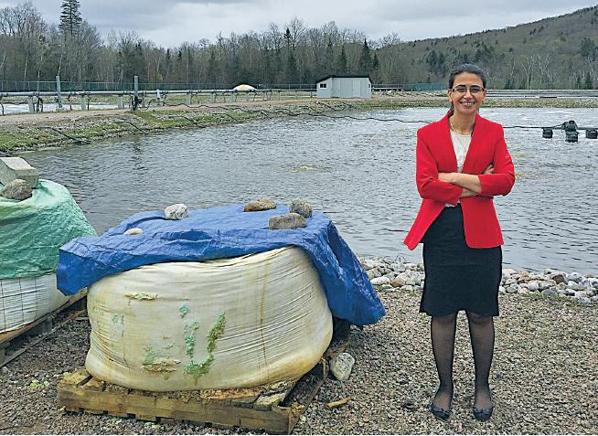 Déphosphoration des eaux usées issues de la déshydratation des boues de fosses septiques par procédé de traitement physico-chimique utilisant le sulfate ferreux comme agent coagulant